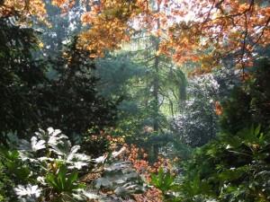 Arboretum-graeme-green
