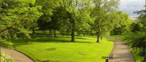 nottingham-arboretum-trees-710px