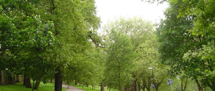 View across The Forest, Nottingham, 2006. [Photo: Paul Elliott]